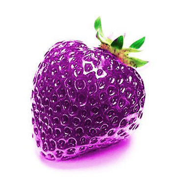 500Pcs Purple Strawberry Seeds Garden Seeds Fruit Seeds Super Strawberry Garden Climbing Plant